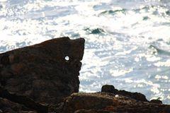 Tiburón roca