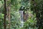 Tief im Regenwald
