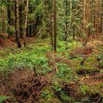 Tief im Wald (1)