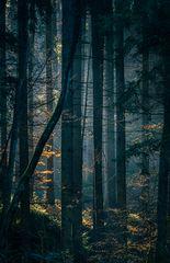 tief im Wald 2...