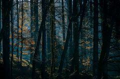 tief im Wald...
