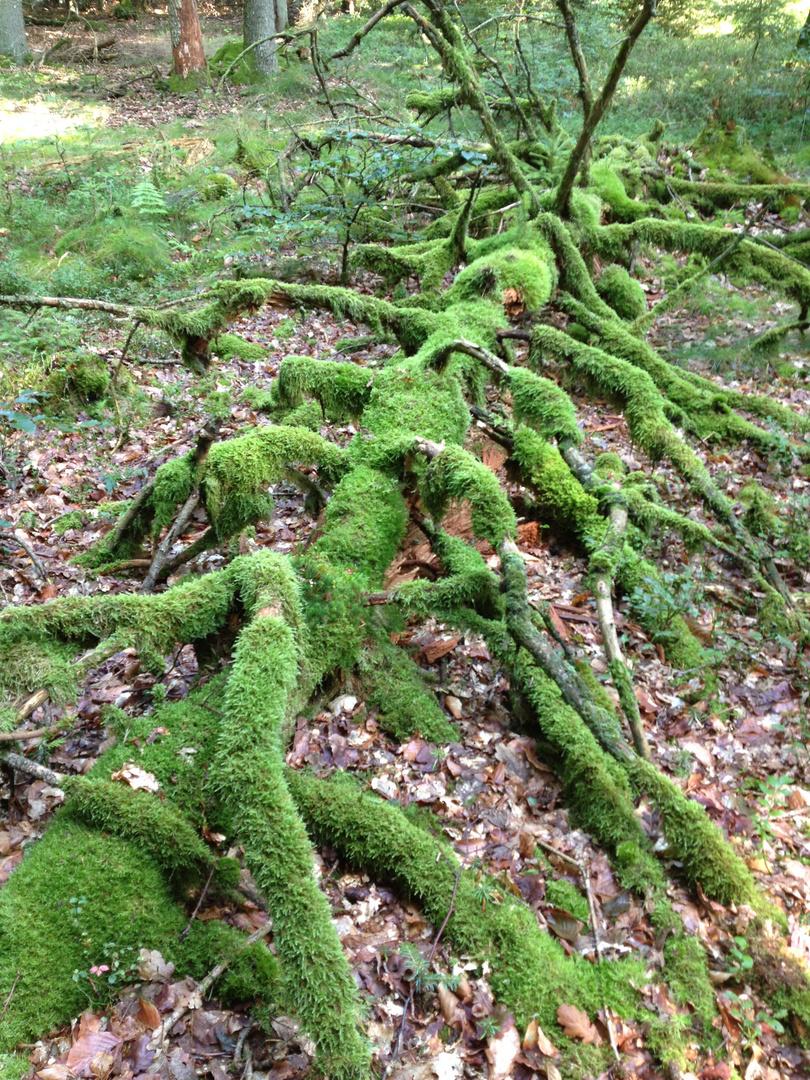 tief im Wald giebt es traumhafte Stellen