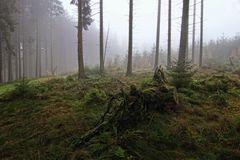 Tief im Wald II