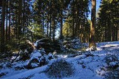 Tief im Wald III