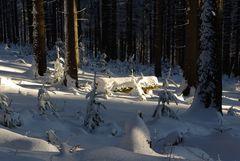 Tief im Winterwald