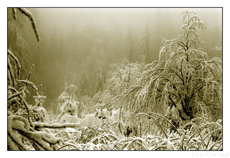 Tief in den Wäldern...