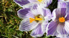 Tief in der Blüte