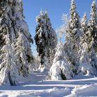 Tief verschneit - und knackig kalt