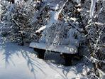Tief versteckt im Winterwald.....