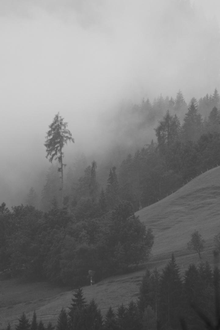 Tiefhängende Regenwolken über Tannenzipfeln