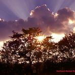 Tiefstehende - Abendsonne, in der Eifel
