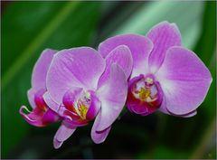 Tiempo de orquídeas