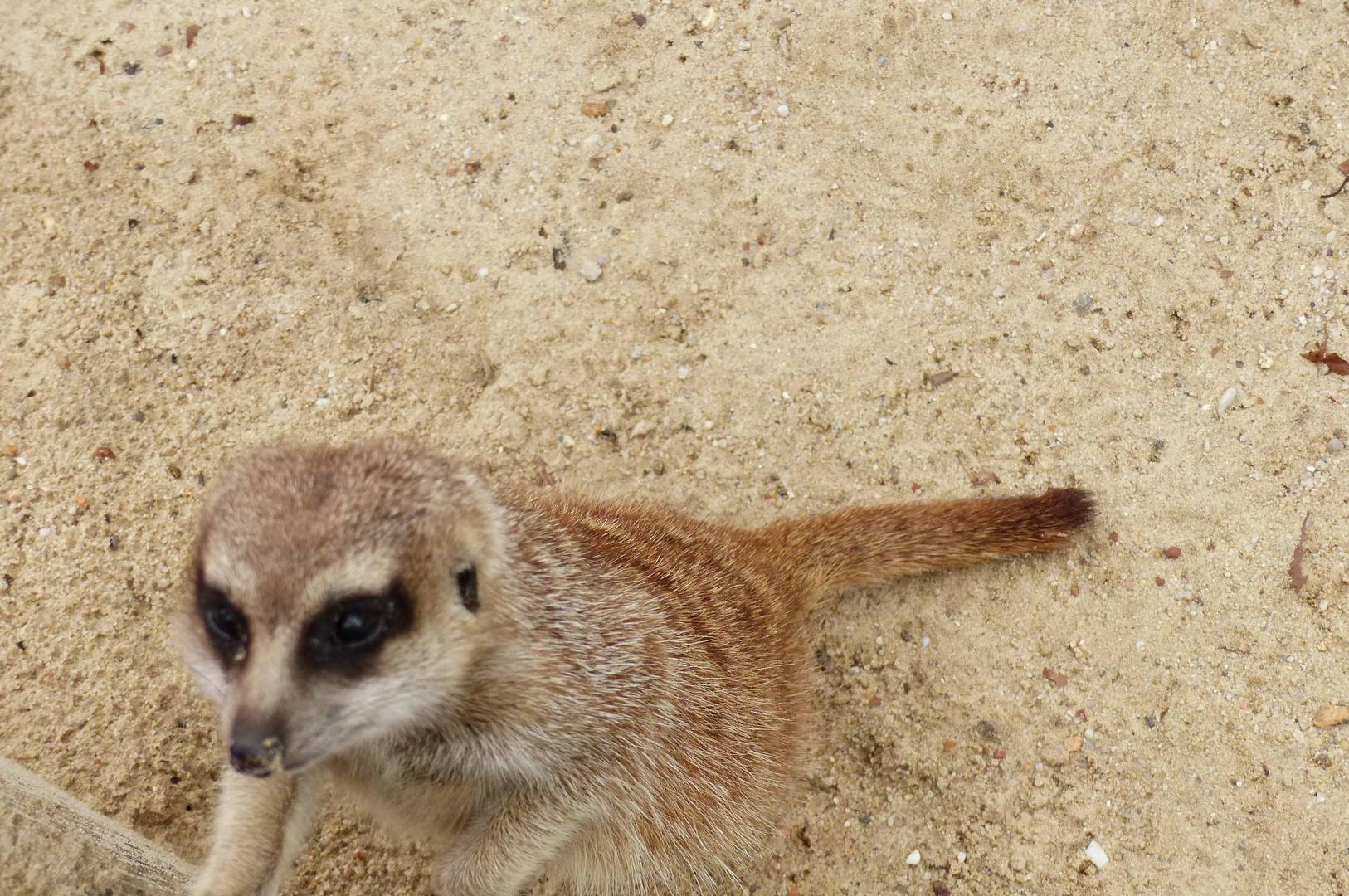 Tier & Freizeitpark Thüle