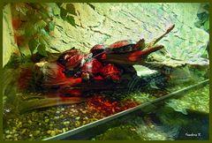 Tier - oder Fisch - im Aquarium---Sitzplatz der Schildkröten