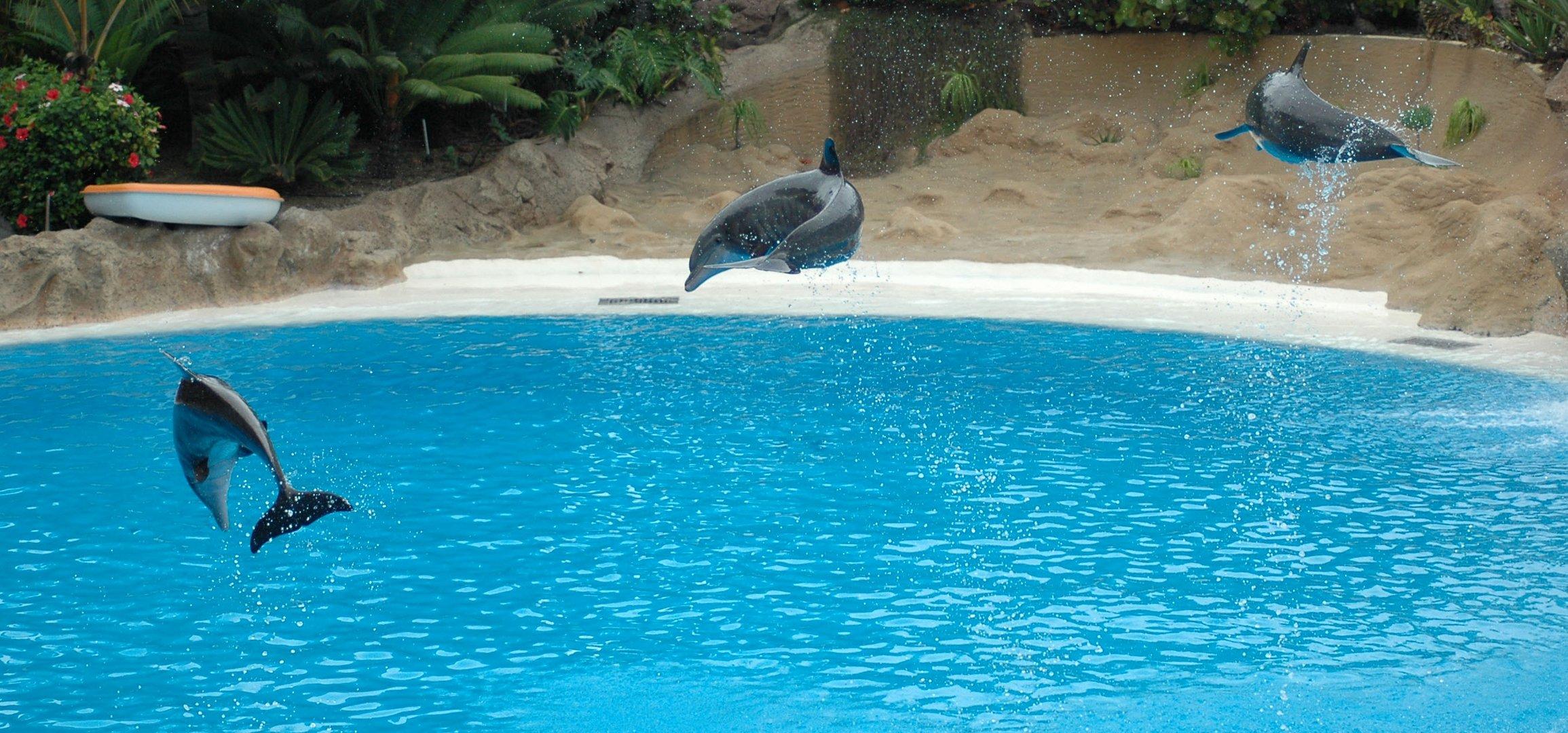 tier qualerei in Loro Parque Tenerife
