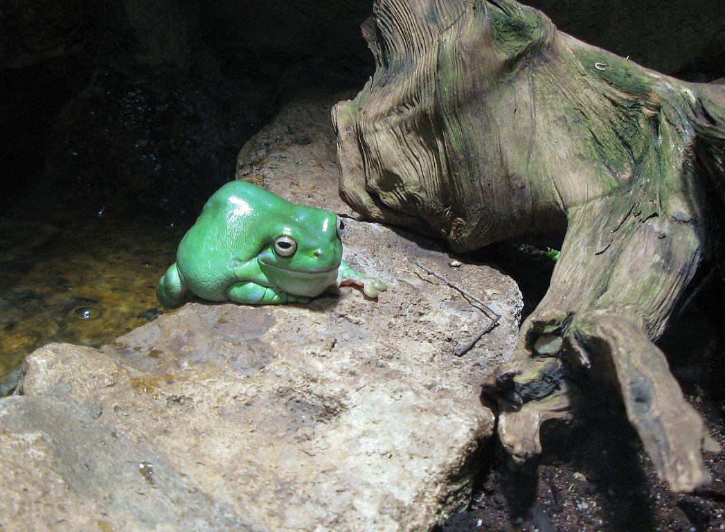 Tierbildgalerie Zoo Erfurt1