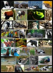 Tiere 2008