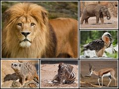 Tiere Afrikas...