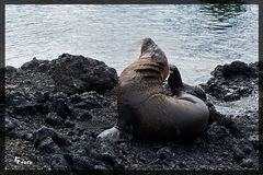 Tiere auf Galapagos