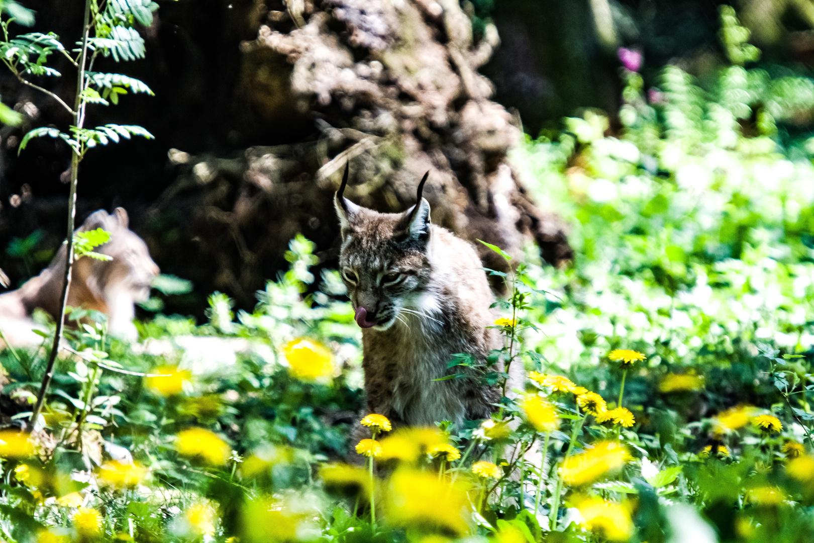Tiere aus Dem Wildpark Poing MUC