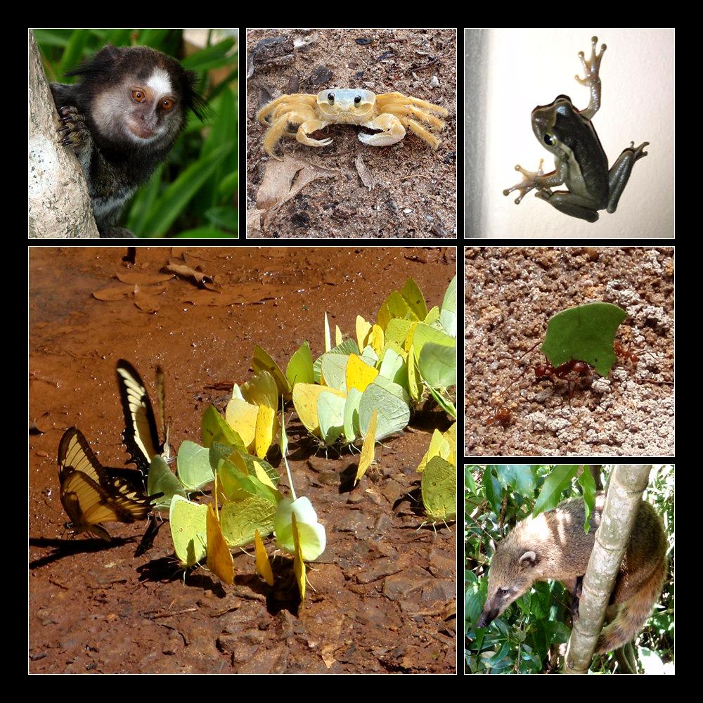 Tiere Brasiliens