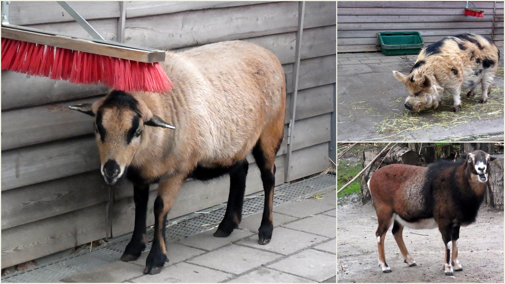 Tiere im Tierhaus der Seniorenstiftung