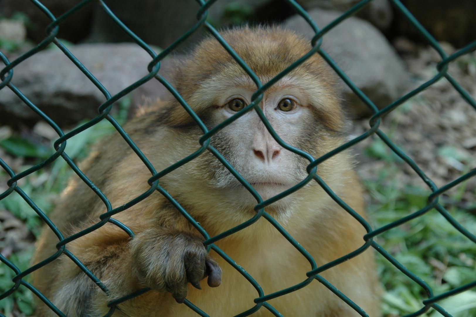 Tiere in Gefangenschaft!
