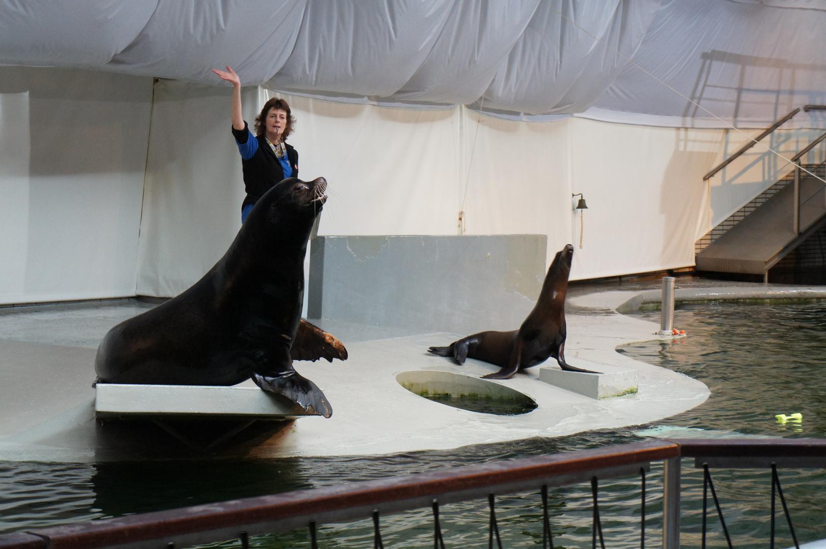 Tiere ins Wasser