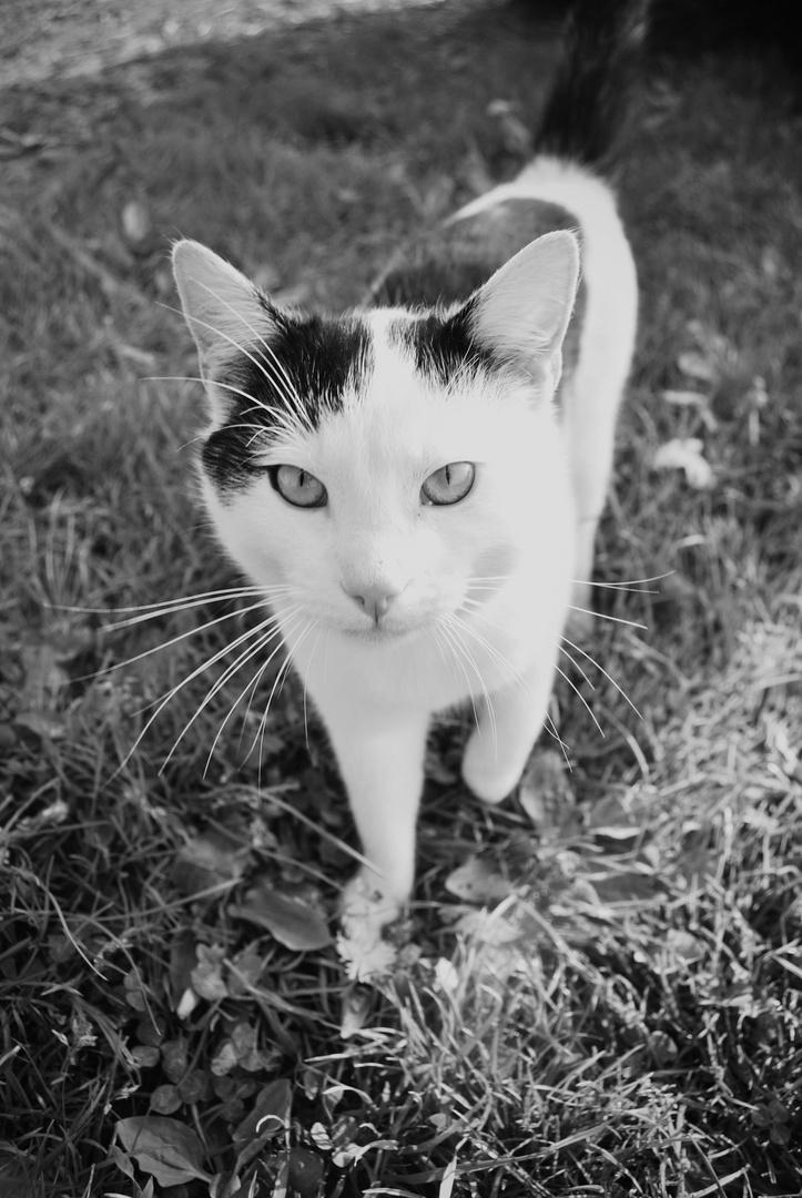 Tierfotografie| Katze