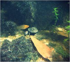 Tierfreundschaft im Aquarium