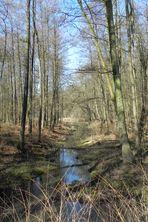 Tiergarten - April 2013