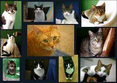 Tierheim-Katzen alle so ....