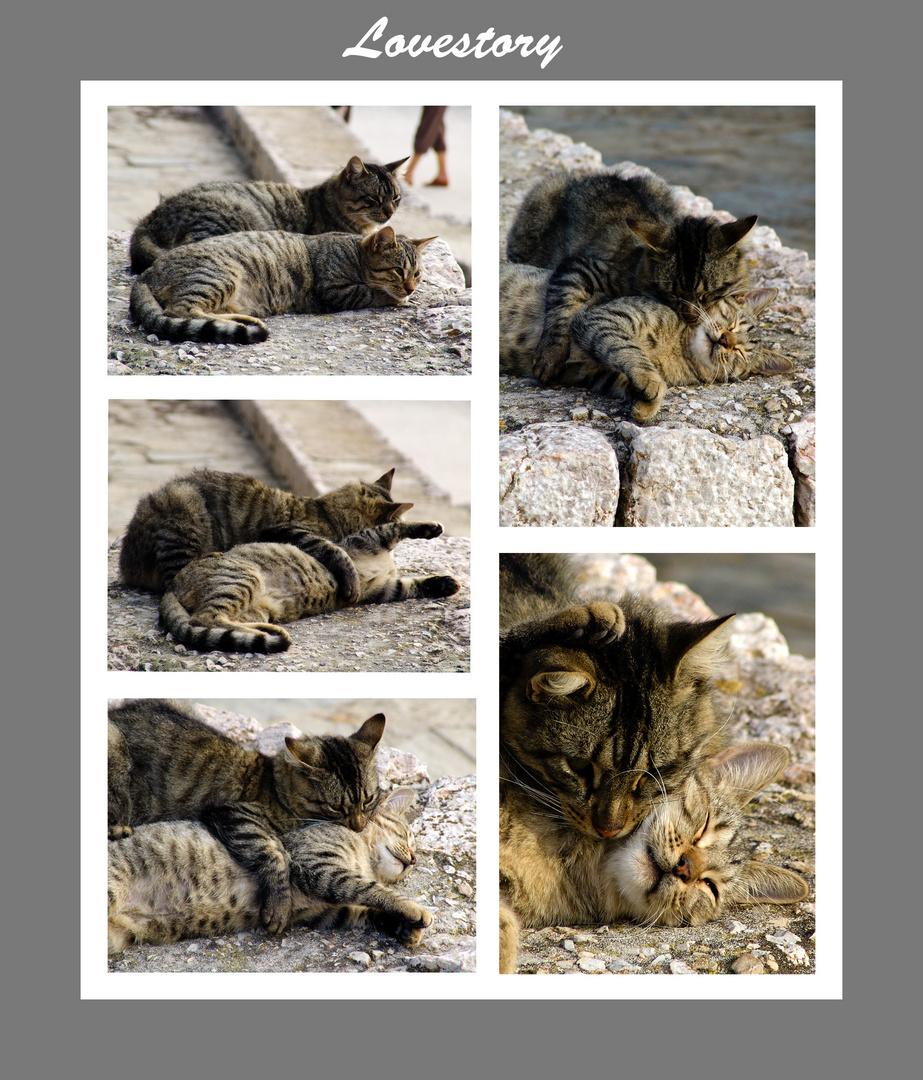 Tierisch verliebt