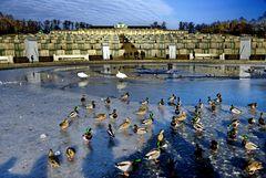Tierische Besucher am Schloss Sanssouci