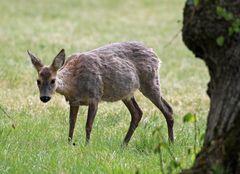 Tierische Bewohner des Nymphenburger Schlossparks