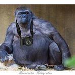 Tierische Fotografen 2
