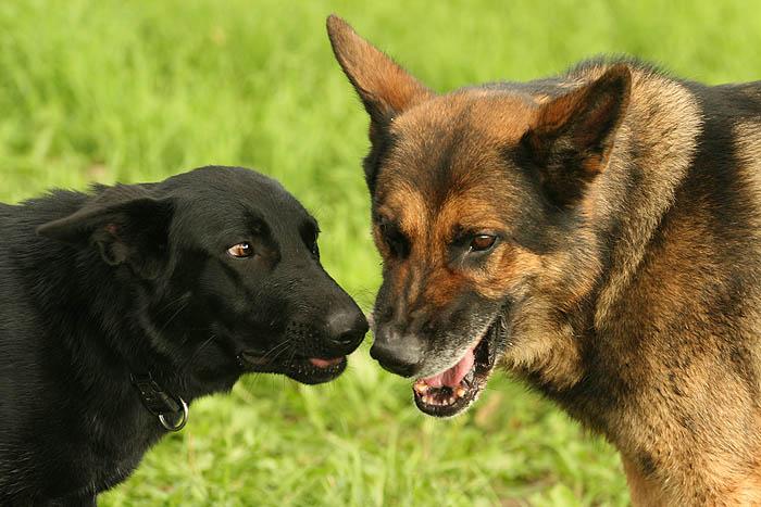Tierische Kommunikation