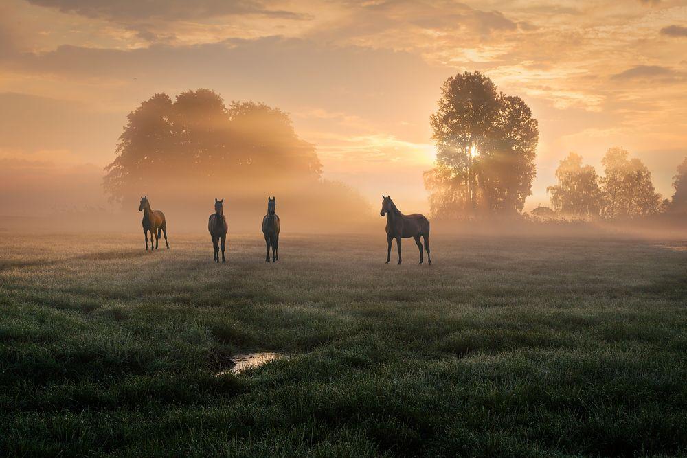 Tierische Stars im Morgenlicht