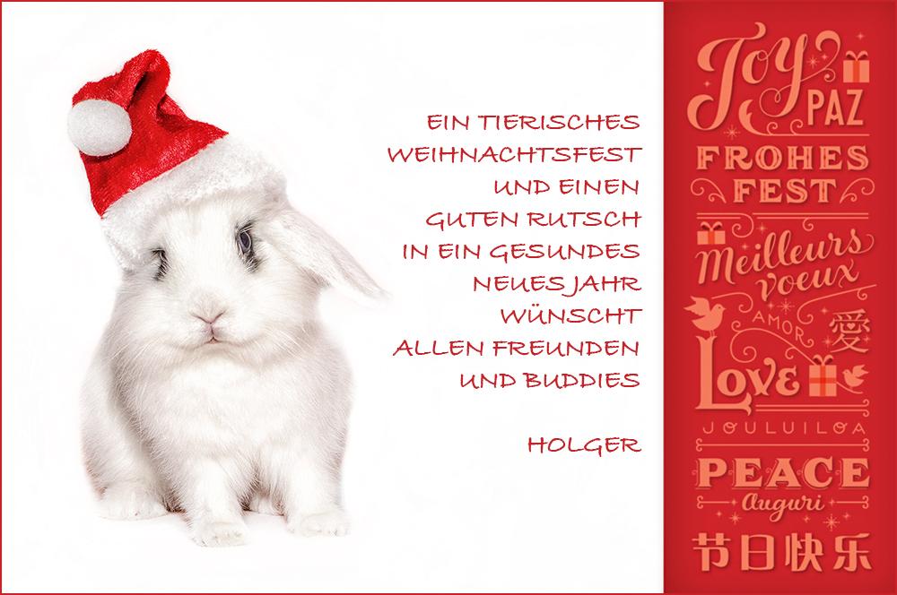 Tierische Weihnachtsgrüße.Tierische Weihnachten Foto Bild Karten Und Kalender