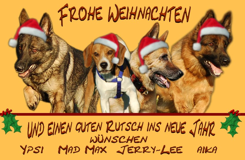 Tierische Weihnachtsgrüße.Tierische Weihnachtsgrüße Foto Bild Archiv Projekte