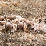 Tierisches Gruppenkuscheln