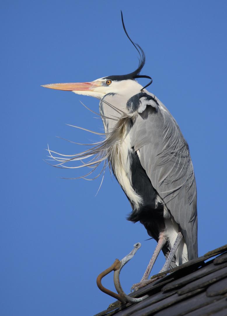 tierisches Windspiel ... 1