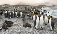 Tierparadies Südgeorgien im Südpolarmeer...