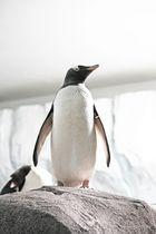 Tierpark Hagenbeck der Pinguin