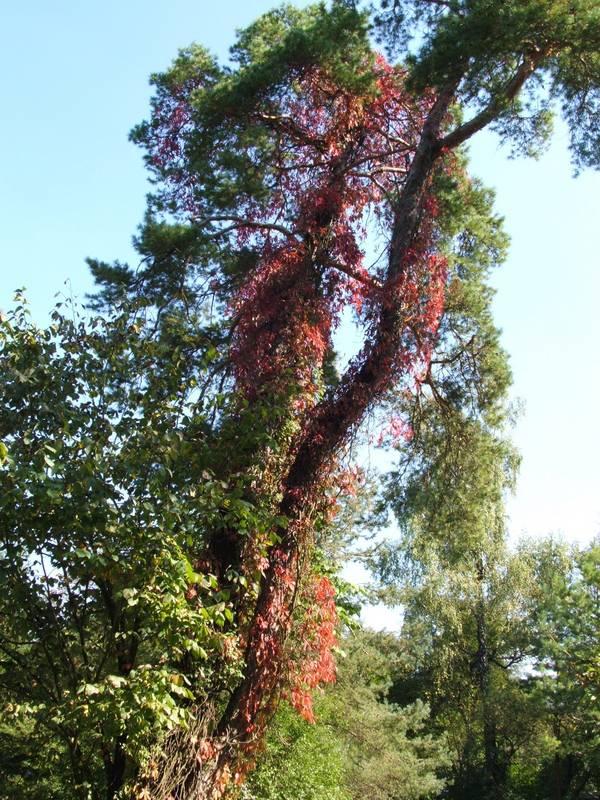 Tierpark Hellabrunn im Herbst