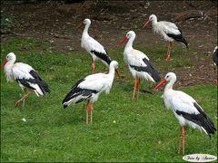 Tierpark Walsrode