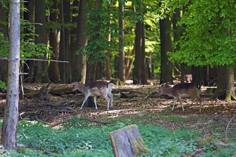 Tierpark Weilburg 003