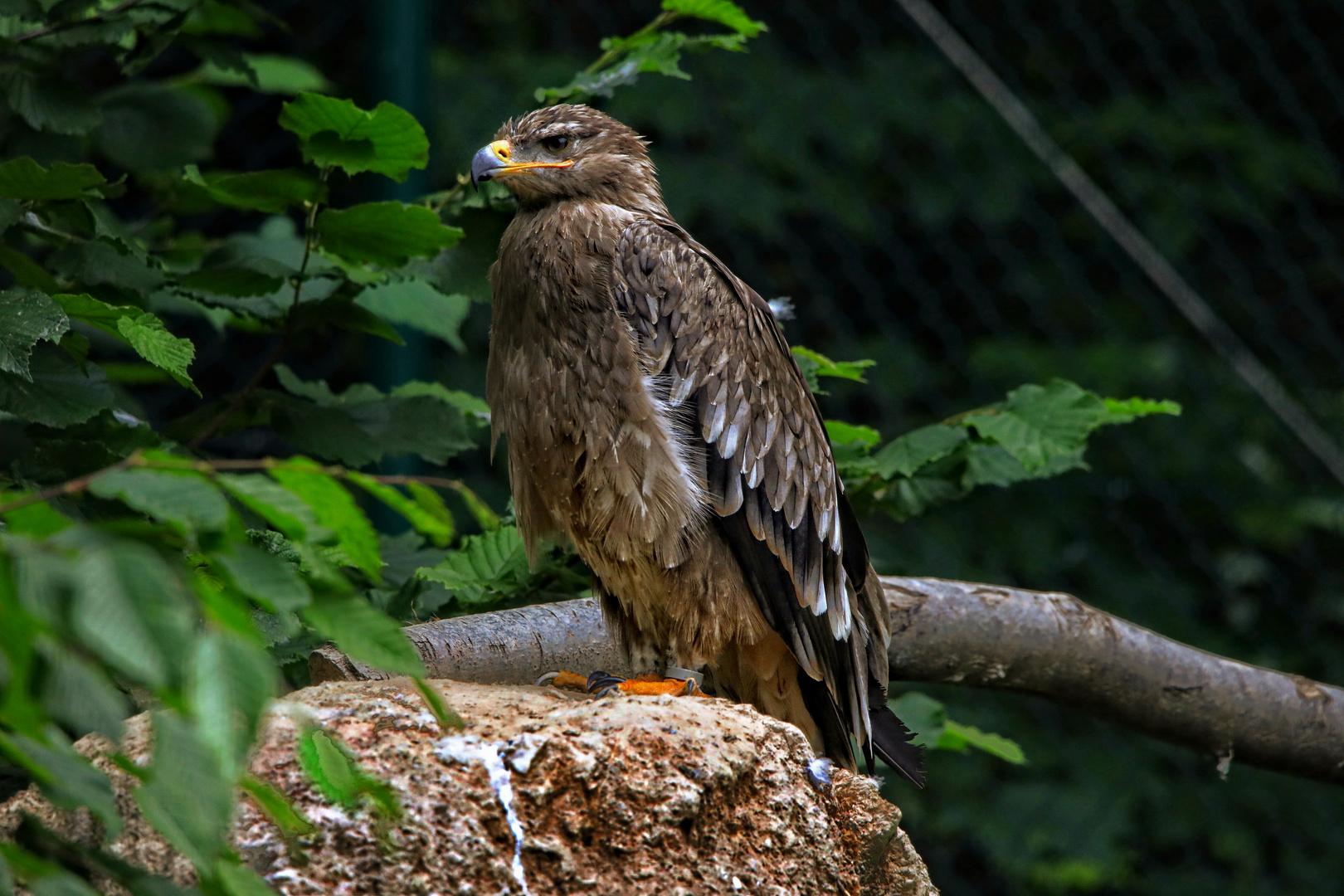 Tierpark Wiesbaden