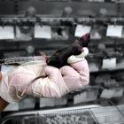 Tierversuche - Hormonspritze - die Erste