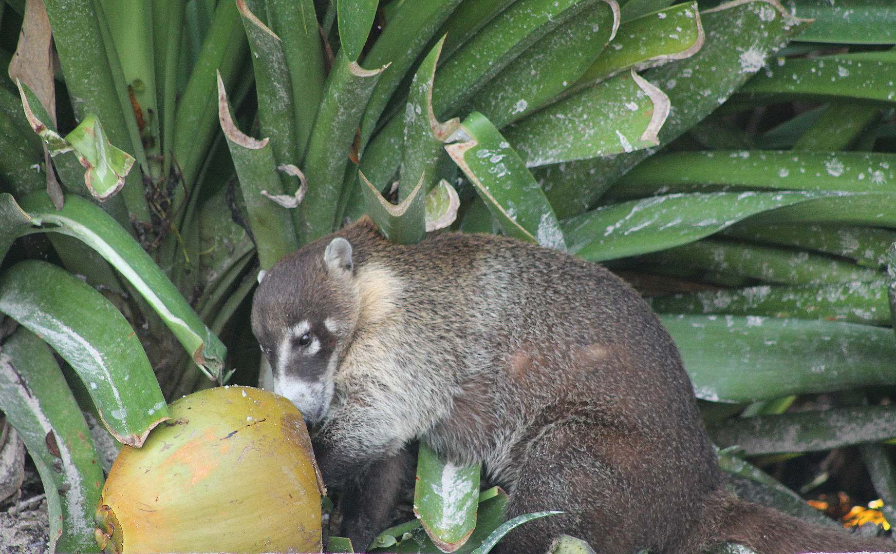 Tierwelt Yucatan 6